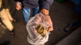 Scientists Find Dangerous Levels of Fecal Matter in Street Cannabis