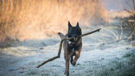 UK Pet Owner Investigated After Dog Kills 9-Year-Old Boy
