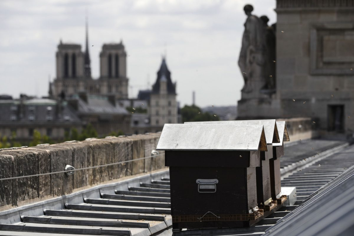 Notre Dame Bee