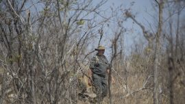 Poacher Eaten by Lions After Getting Killed by Elephant