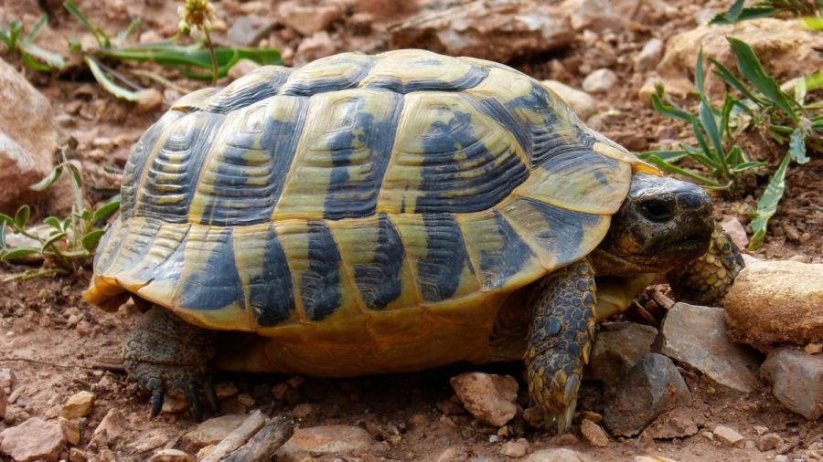 Death of Rare Turtle Leaves 3 Remaining in the World