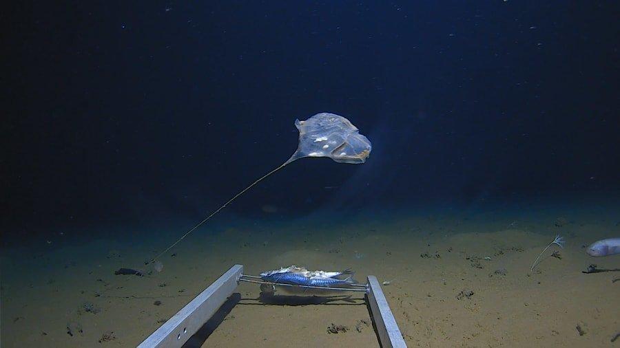 Undiscovered Jellyfish