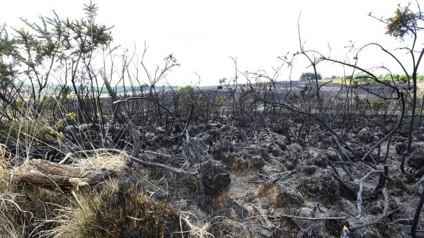 The scene of a fire at Ashdown Forest in East Sussex,