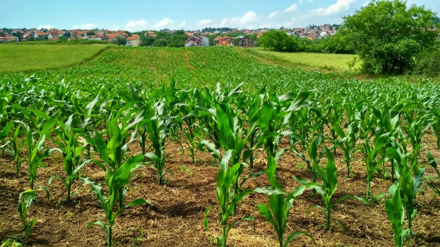 Two Photos Capture the Pain of Indiana Corn Farmers After Excessive Spring Rains