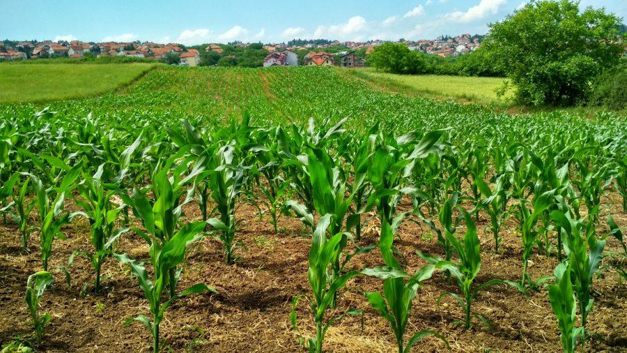 Farmers Turn Cornfield Into a Suicide Prevention Message