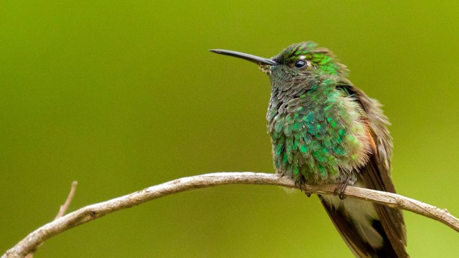 Hummingbird Returns Every Year to Visit Man Who Rescued It