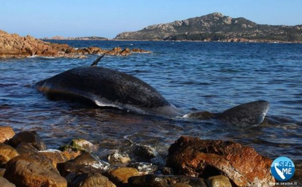 sperm whale washed ashore