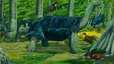 Exotic Flightless Bird Evolves Back For First Time in 136,000 Years