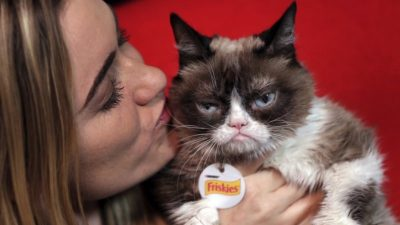 Grumpy Cat, Who Entertained Millions Online, Dies at Age 7