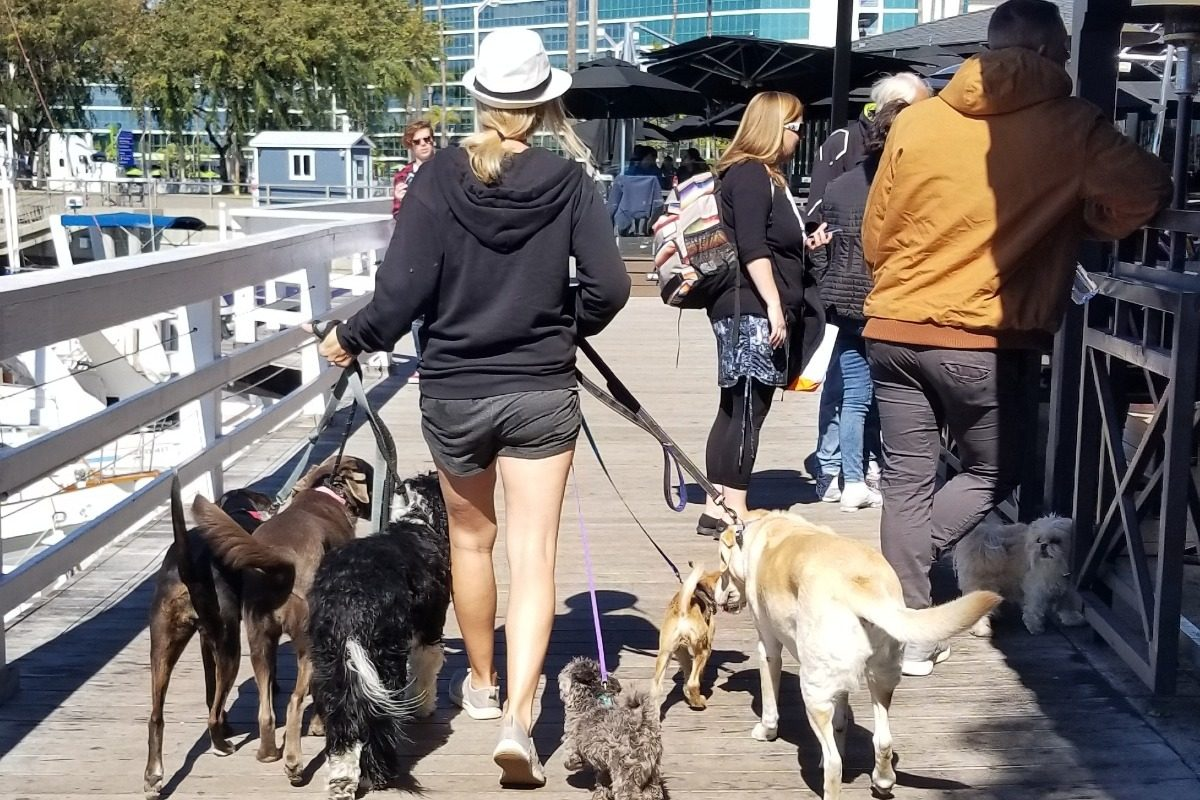 Jessica Bingaman walking dogs