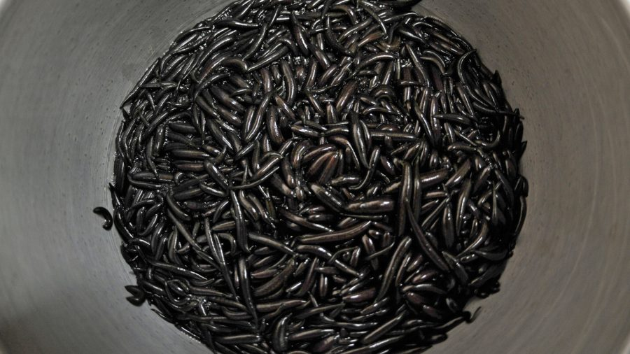 Flight Passenger Fined $15,000 for Carrying Thousands of Leeches in Carry On Luggage