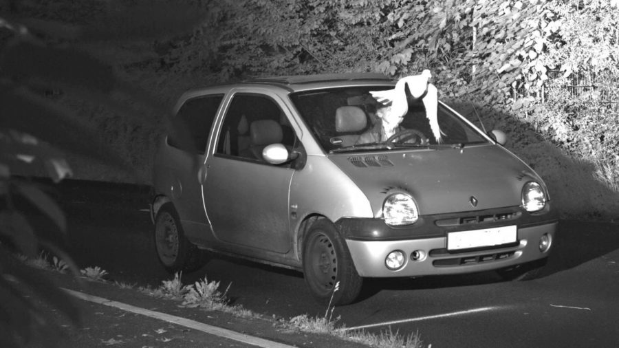 Pigeon's Perfect Timing Helps Save Driver From Copping a Speeding Fine