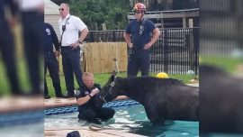 Florida Horse Dies After Taking a Dip in a Family Swimming Pool