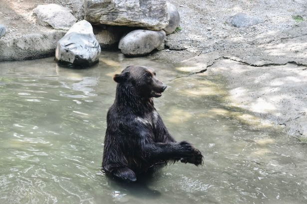 Man Claims Bear is Bribing His Dog to Look the Other Way While Dumpster Diving