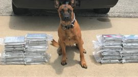 $1.4 Million of Cocaine at Traffic Stop Tracked Down, Thanks to K-9 Unit