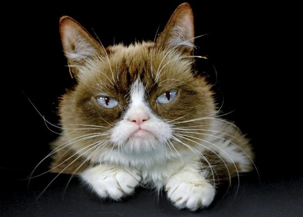 Grumpy Cat posing for a photo in Los Angeles