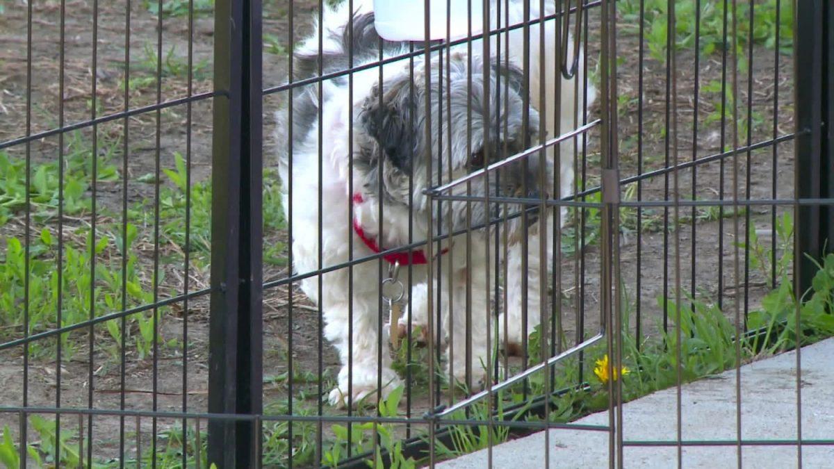 iowa dog disease