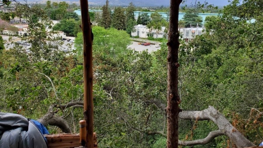 Police Find Burglar Living in 'Very Well-Built and Modern Tree House'
