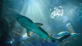 2 Men Injured in Separate Shark Attacks Off Florida Coast