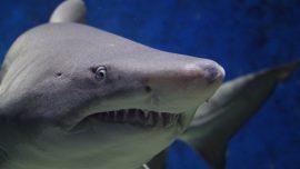 8-Year-Old Boy Attacked by Shark Off North Carolina Beach