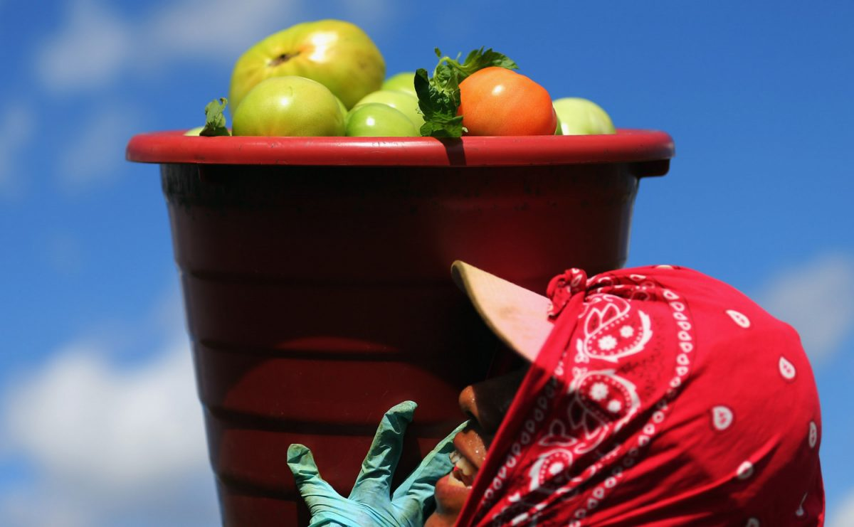 worker carries bucket of tomatoes
