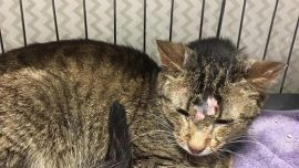 178 Cats Rescued From Suburban Detroit House, Homeowners Now Face 2 Charges