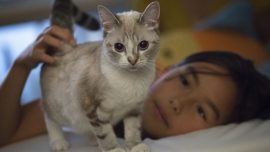 Proposed Cat Declawing Ban Passes New York Legislature