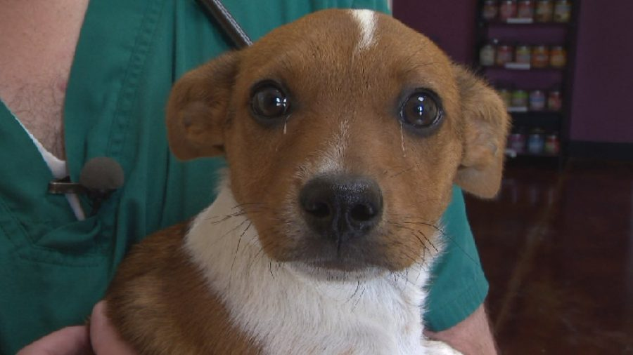 Puppy Found in Woods With Severed Leg by Folks Who Were Fishing