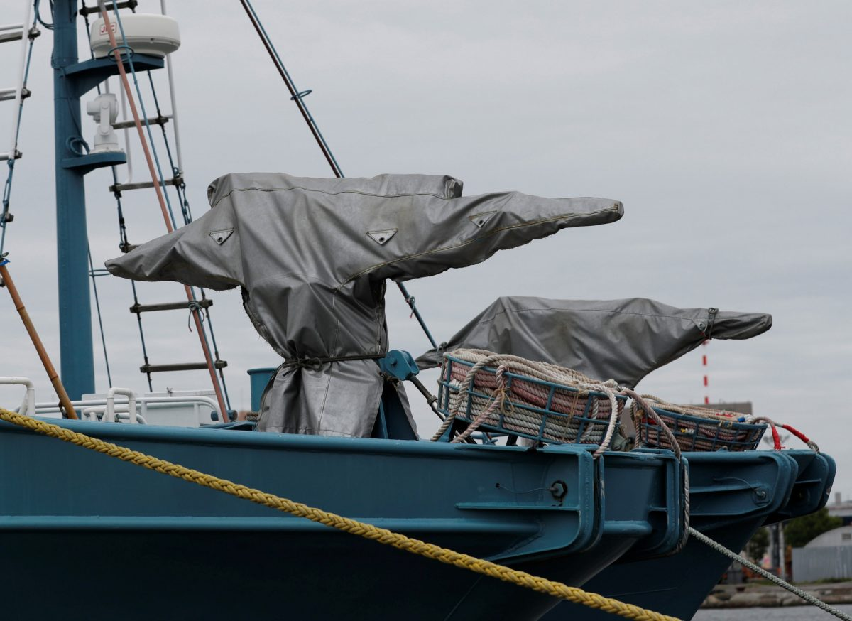 Japan commercial whaling ships
