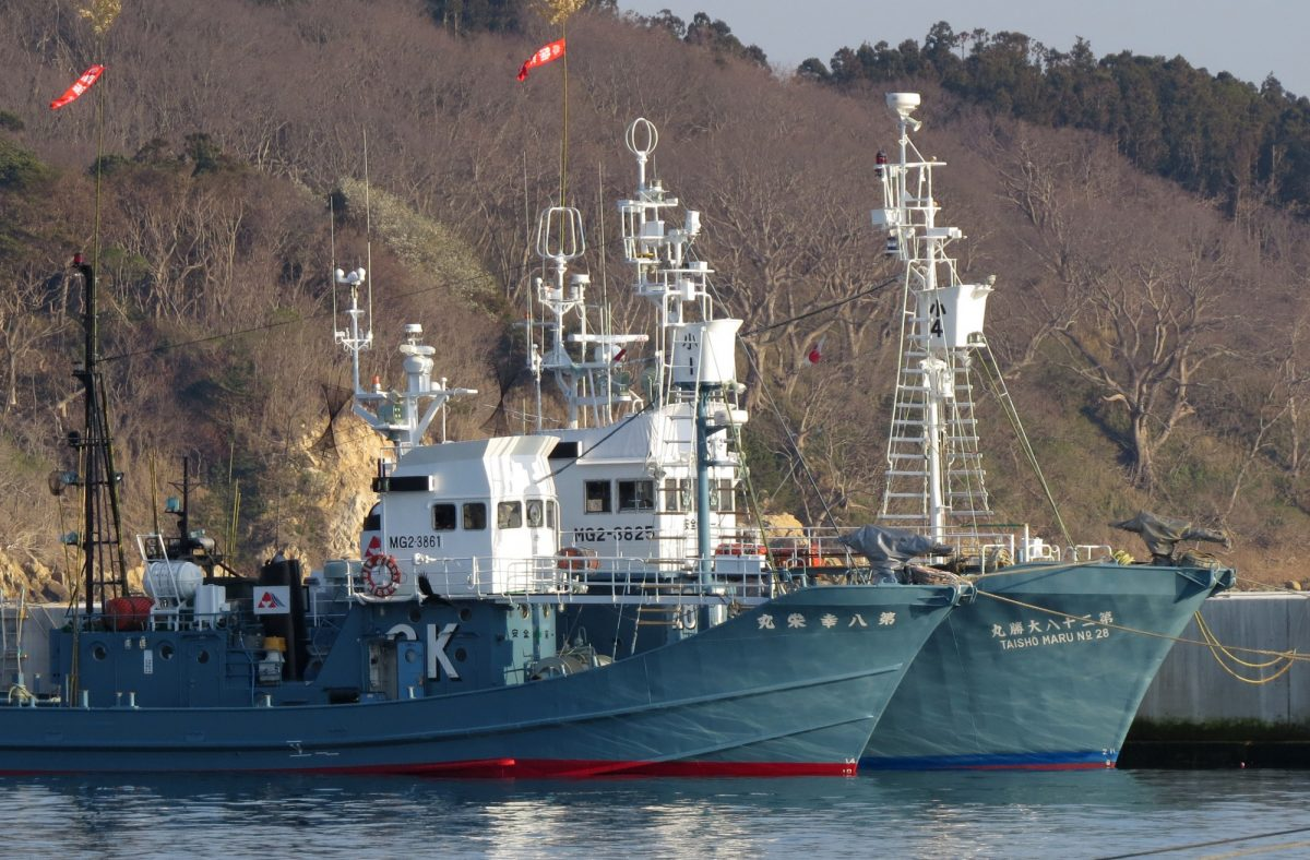 Japanese commercial whaling ships