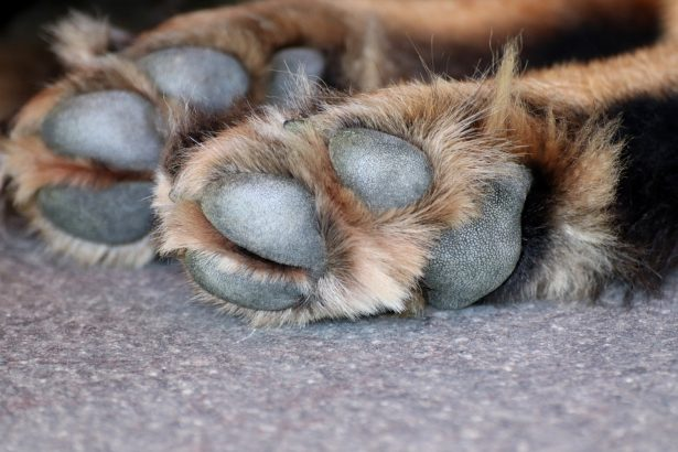 Vet Issues Warning After Dog's Feet Burn in Intense Heat Wave