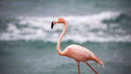 Florida Man Accused in Flamingo's Death Fatally Struck by Truck