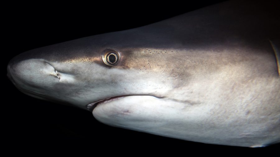 South Carolina Man Charged With Branding Sharks Like Cattle
