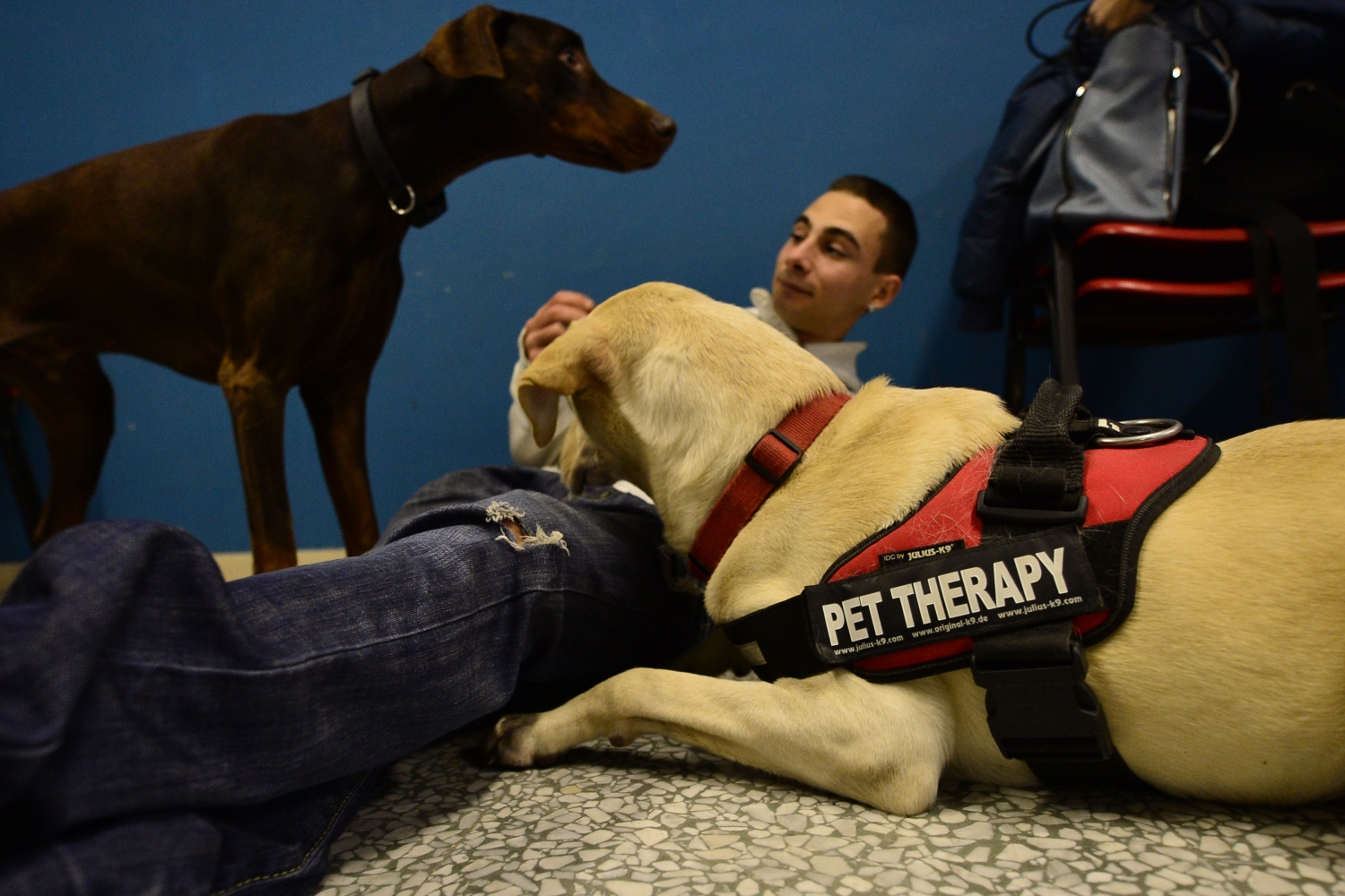 An inmate plays with dogs
