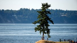3 Million Gallons of Raw Sewage Spilled Into Pudget Sound Due to Power Outage, Beaches Close
