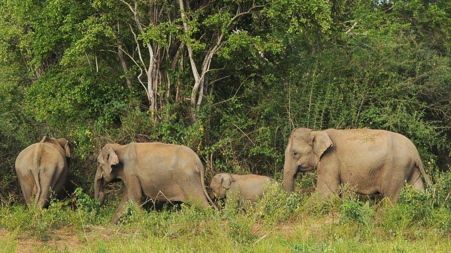 Boycott Urged After Photo of Emaciated Sri Lanka Elephant Emerges