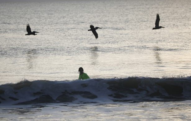 Pelicans fly over a youth swimming at Playalinda Beach
