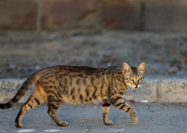 79-Year-Old to Serve Jail Time for Feeding Stray Cats and Dogs