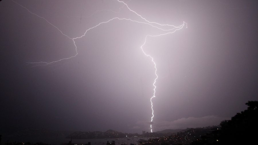 Lightning Strikes Tree, Kills Bear in Woodland Park