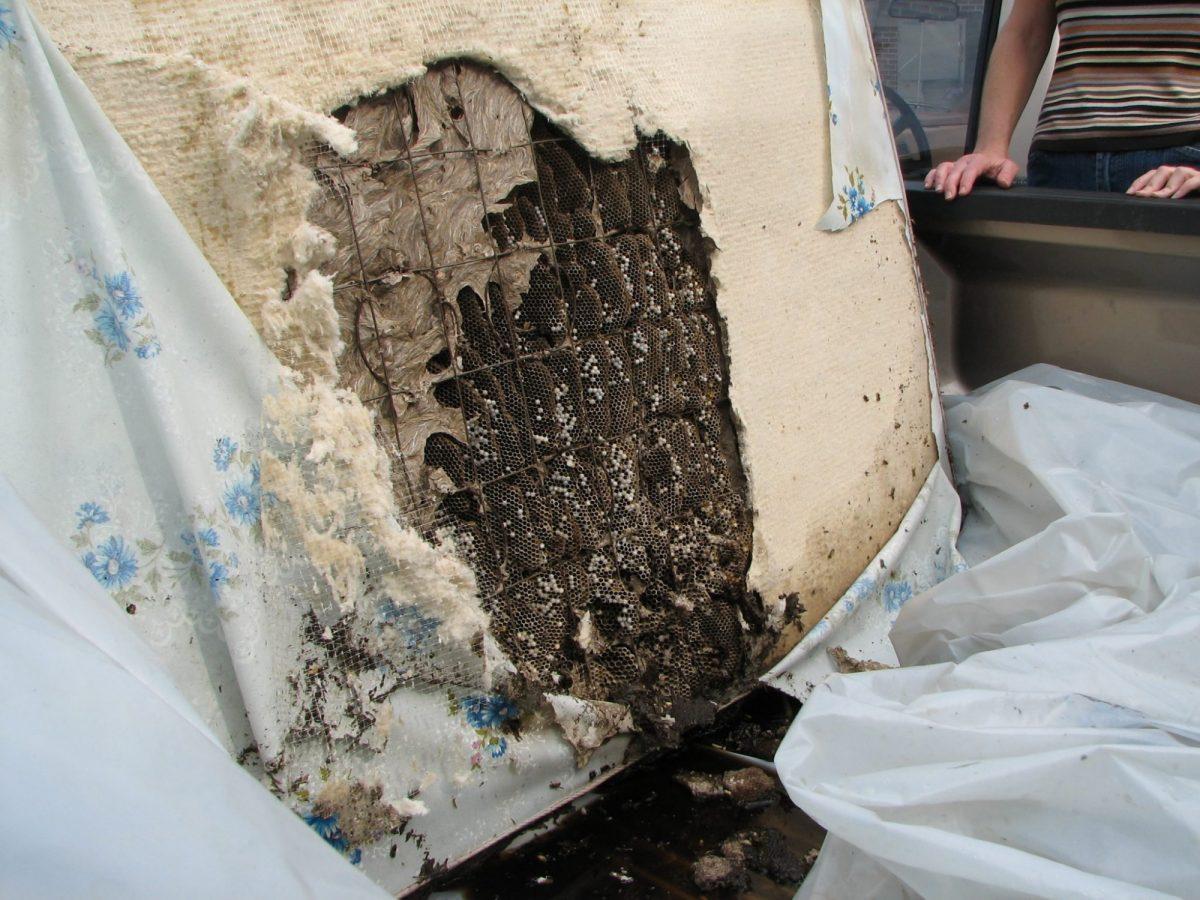 A perennial nest found inside an discarded mattress.