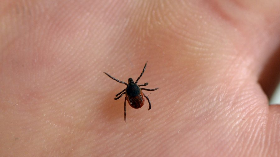 Doctors Confirm Maine Resident Has Rare Tick-Borne Illness That Can Cause Brain Infections and Death
