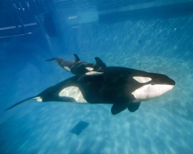 Virgin Holidays Will No Longer Offer Trips to SeaWorld, Other Marine Mammal Parks