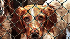 Delaware Becomes the First No-Kill State for Animal Shelters