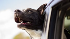 Man Breaks Car Window to Save Distressed Dog Trapped Inside