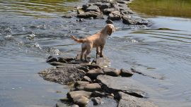 Dog Owners Raise Awareness of Dangerous Toxic Algae Harmful to Dogs