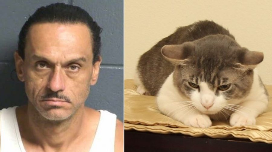 Man Accused of Animal Cruelty After Cat Tests Positive for Meth