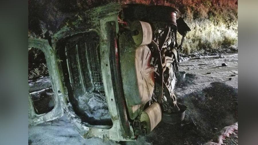 Bear Falls on Northern California Patrol Car