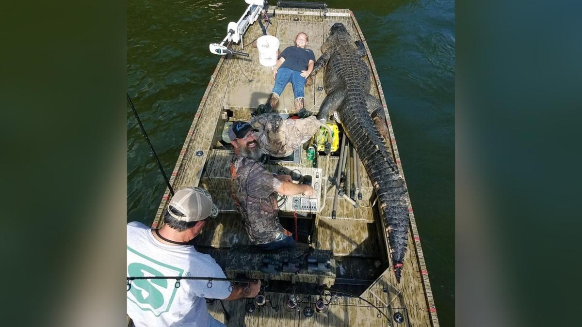 Record Georgia Alligator