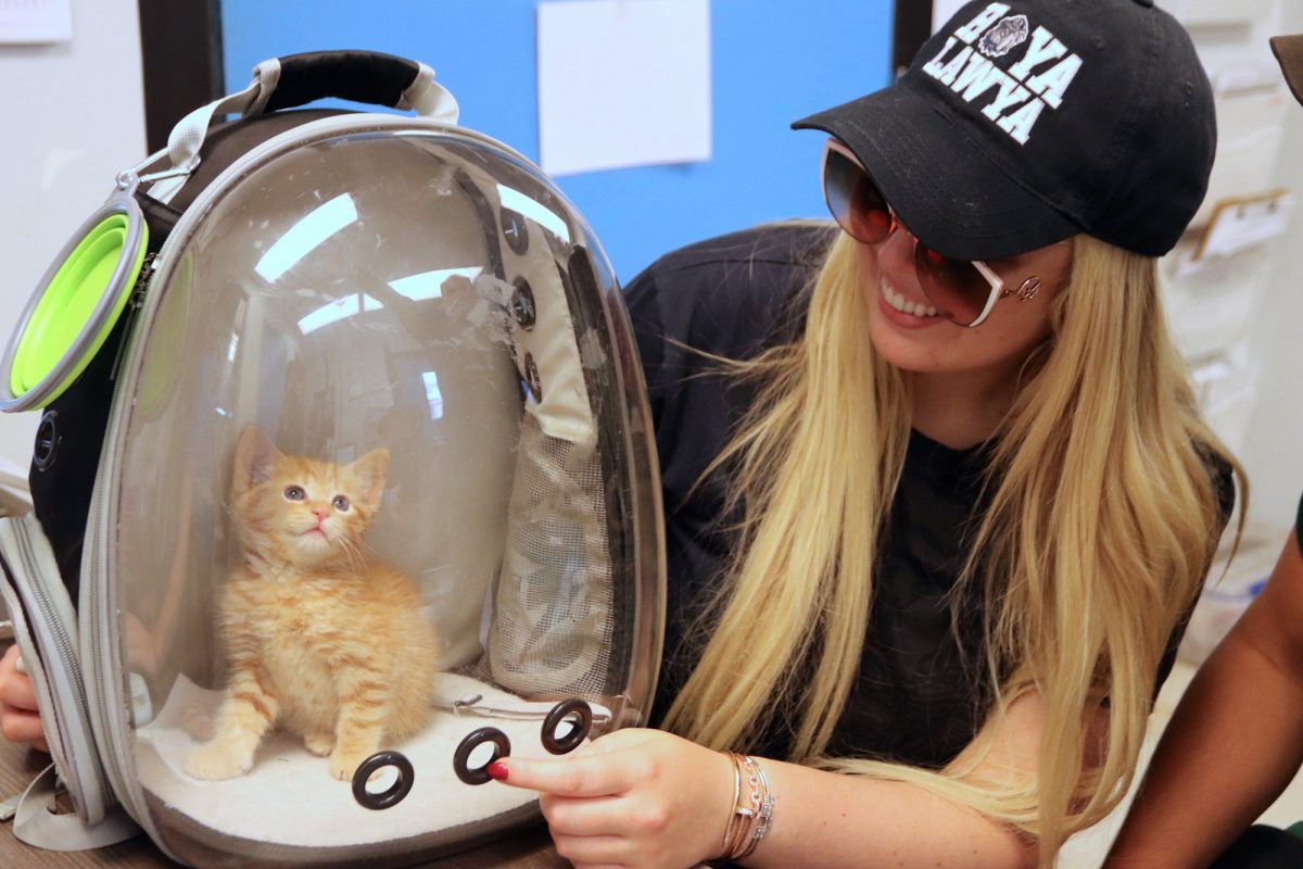 A picture of Tiffany Trump and her new kitten