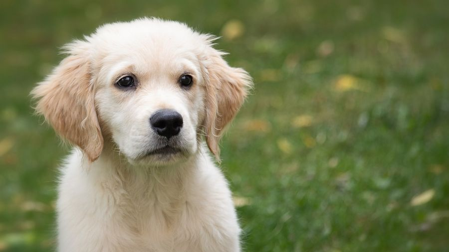 Dogs in Utah Infected With Bacterial Disease That Can Spread to Humans